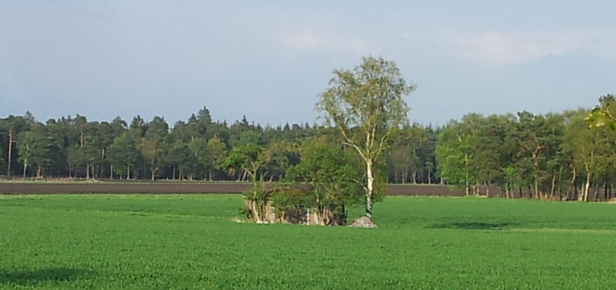 HuetteImFeld